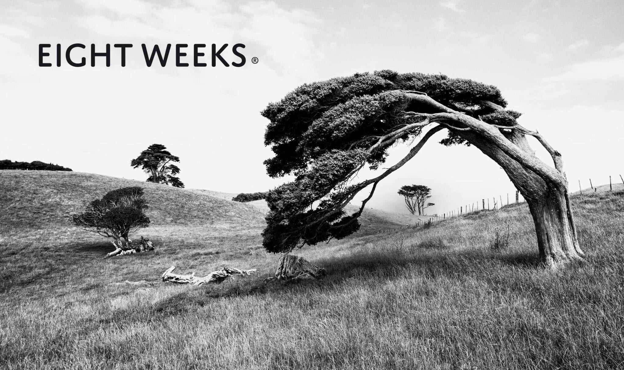 Product Eight Weeks Tree